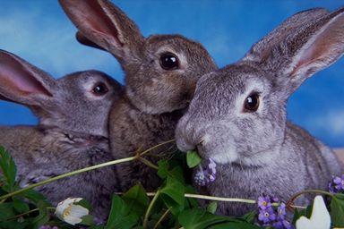 一组可爱的动物图片(6)