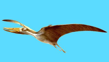 图文:我国发现飞行的爬行动物新类群化石(1)