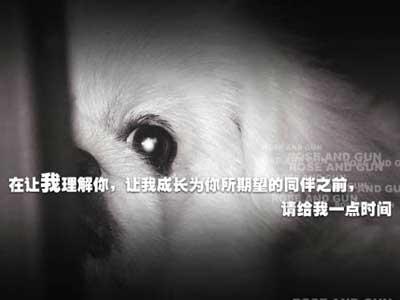 爱护动物,珍爱生命-剑风博客