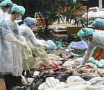 女博士带队中国DNA鉴定组