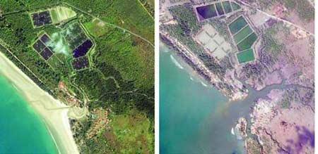 泰国蔻立岛受灾前后的卫星;; 印度洋大海啸 世纪考验; 印度洋海啸世纪