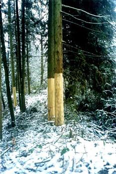 乱砍滥伐引起学者关注:还有多少山林可以沉默