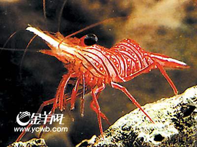 只)珍稀的海洋红色动物