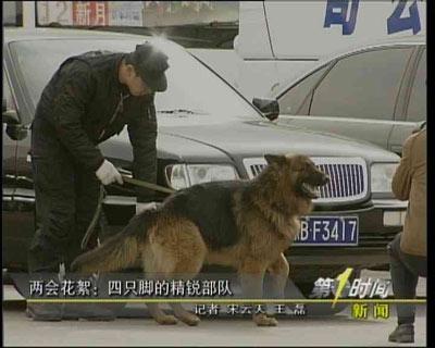 警犬成为保护两会安全的精锐部队 每天出动七次
