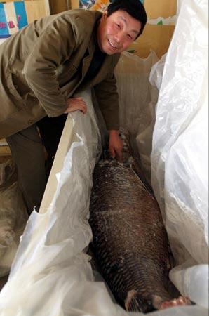 西安钓鱼王巨型青鱼宴客 百人同吃一条大鱼(图)