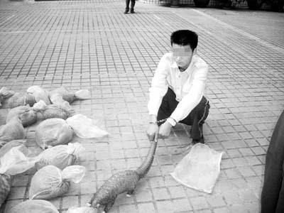 """贩运国家二级保护动物""""地老鼠"""""""