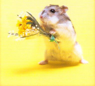 《弗里斯比太太和实验室的老鼠》