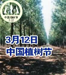 中国植树节