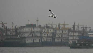 21次南极科学考察队胜利回国 24日抵达浦东码头