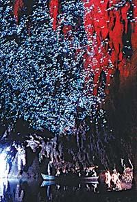 看世界第九大奇迹:萤火虫洞头顶如星河流动(图)