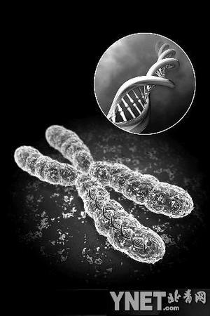 英科学家成功破译人类X染色体(图)