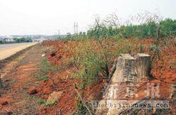 国家林业局调查金光毁林事件 10天可出调查结果