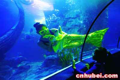 壁纸 海底 海底世界 海洋馆 水族馆 400_268