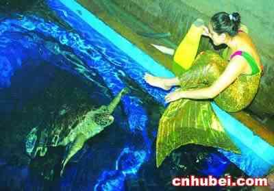 壁纸 海底 海底世界 海洋馆 水族馆 400_279