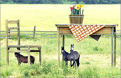 德国牧场的超 袖珍 骏马