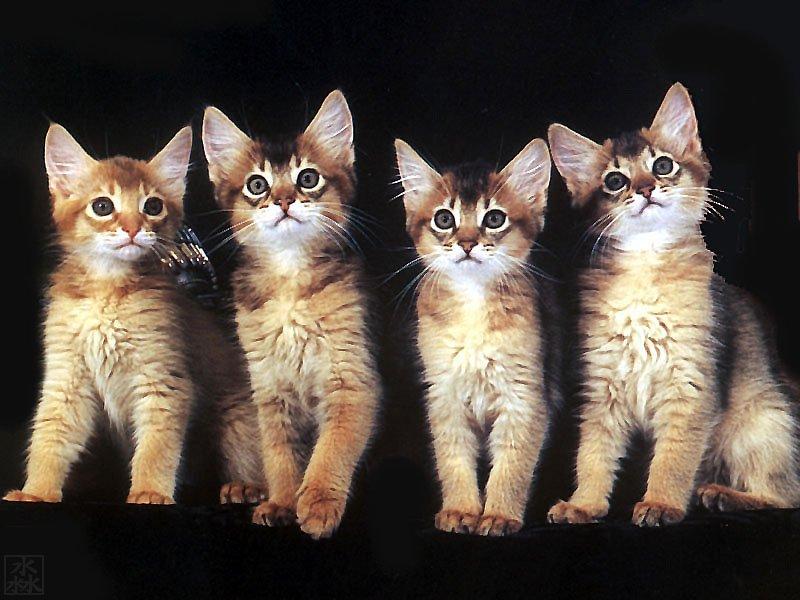 搜狐it频道--可爱猫咪桌面壁纸