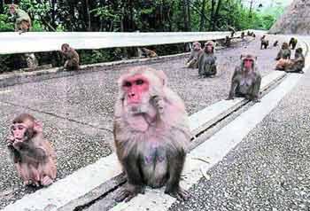 动物管理员闯南亚