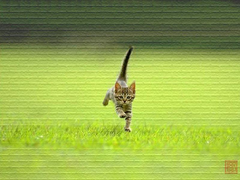 可爱猫咪桌面壁纸