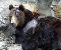 刘海洋伤熊事件结局_刘海洋伤熊事件
