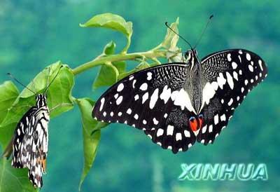 组图:昆明蝴蝶园的珍稀蝴蝶