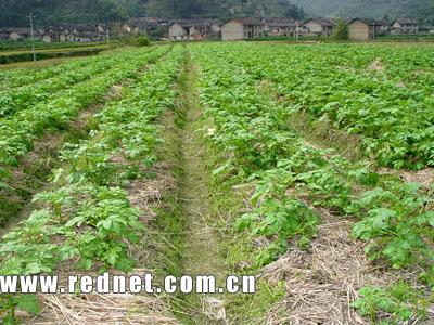 郴州资兴加快农业产业结构调整(组图)