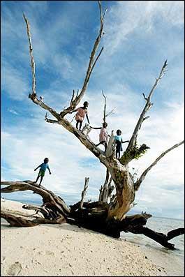 树枝马儿童手工