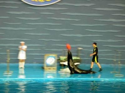 组图:大连老虎滩海洋馆情趣盎然的海狮表演