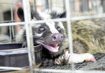 据上海市野生动物保护站