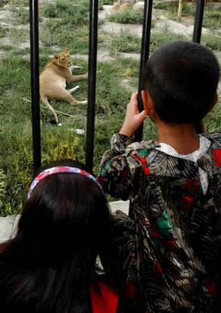 7月18日,在阿富汗首都喀布尔的动物园里,两名儿童在参观由中国捐赠