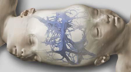 连体男婴头部软组织结构图