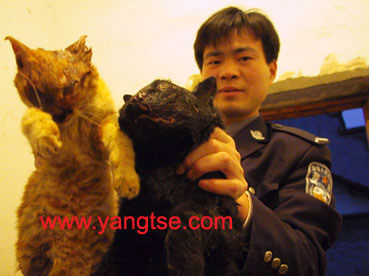 面对两只刚被宰杀的野山猫,干警愤怒不已.